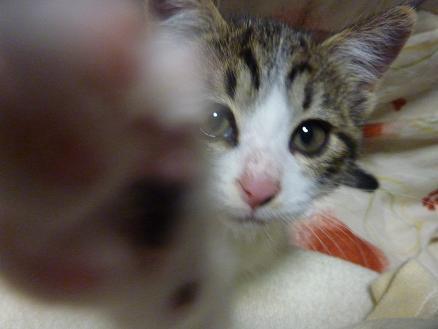 守護動物霊:猫「ぺしぺしぺしっ!」_f0168392_11023289.jpg