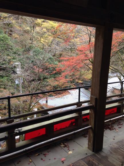 京都の紅2015_a0188798_23172801.jpg