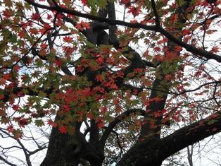 寺家公園の紅葉_e0008704_10205459.jpg