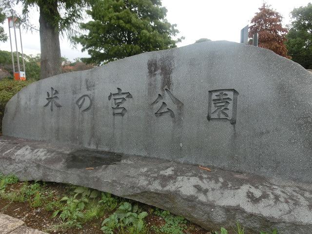 米の宮公園で被爆二世「アオギリ」の苗木の記念植樹_f0141310_719738.jpg