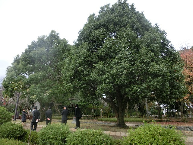 米の宮公園で被爆二世「アオギリ」の苗木の記念植樹_f0141310_7204439.jpg
