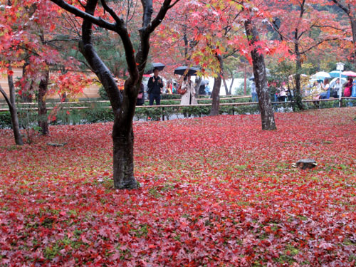 紅葉だより29 雨の金閣寺_e0048413_16312124.jpg