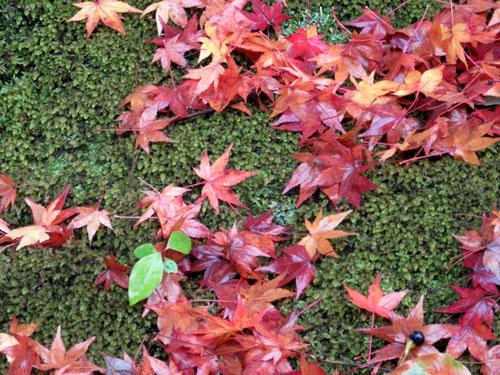 紅葉だより29 雨の金閣寺_e0048413_16313582.jpg