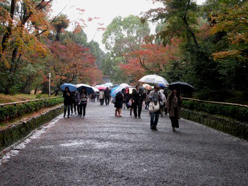 紅葉だより29 雨の金閣寺_e0048413_1631888.jpg