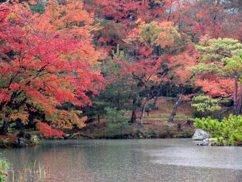 紅葉だより29 雨の金閣寺_e0048413_16322865.jpg
