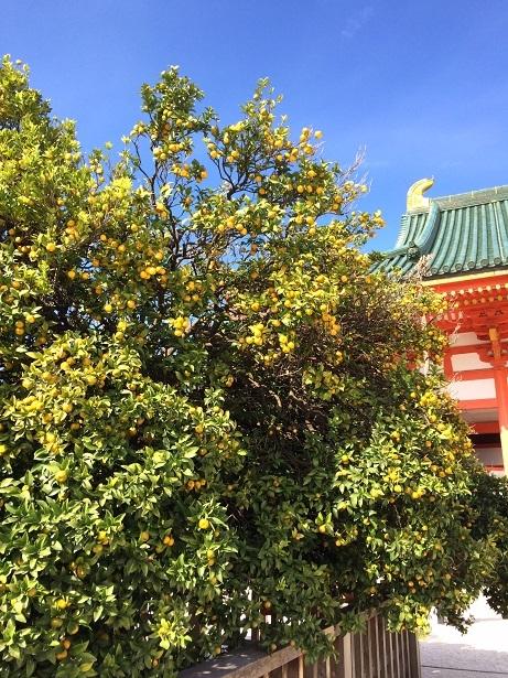 京都_f0067122_09444006.jpg