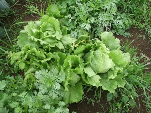 野菜は...安売り~_b0137932_18311378.jpg
