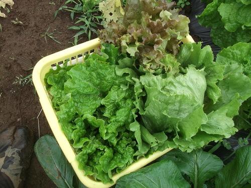 野菜は...安売り~_b0137932_18321448.jpg