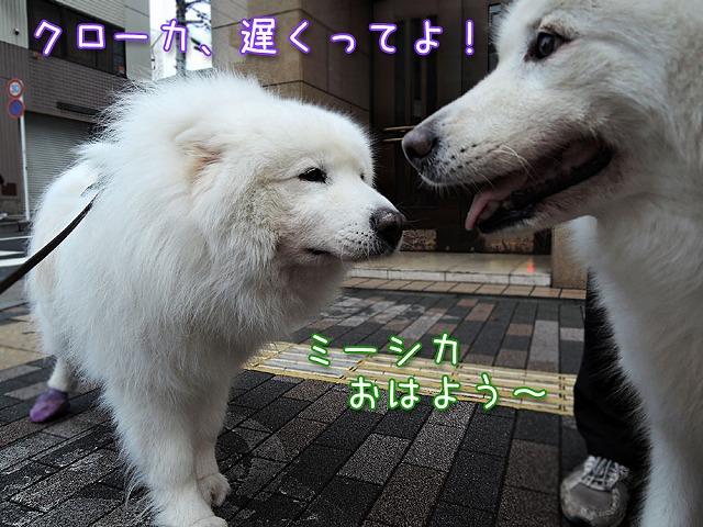 雨上がり朝散歩×2_c0062832_10381347.jpg