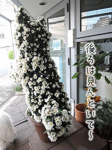 雨上がり朝散歩×2_c0062832_10385880.jpg