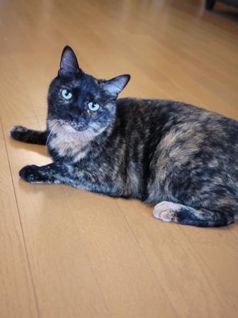 猫のお留守番 ワサビちゃん天ちゃんう京くん編。_a0143140_23331521.jpg