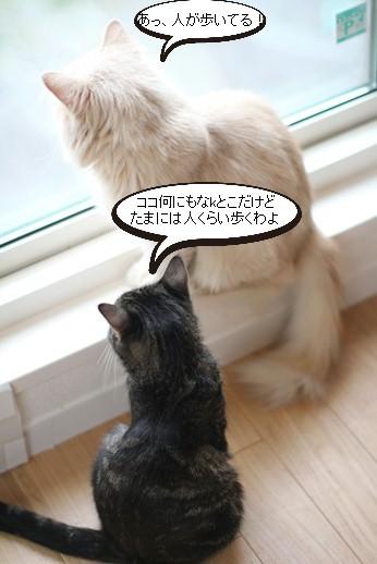 今日の保護猫さん達_e0151545_20531231.jpg