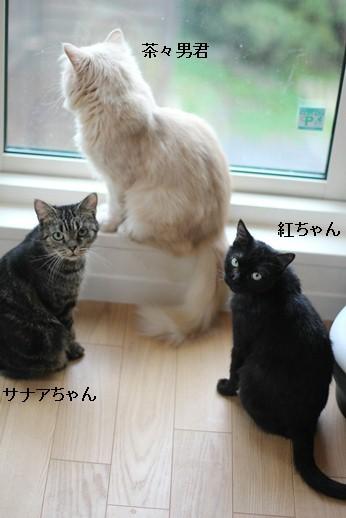 今日の保護猫さん達_e0151545_20532072.jpg