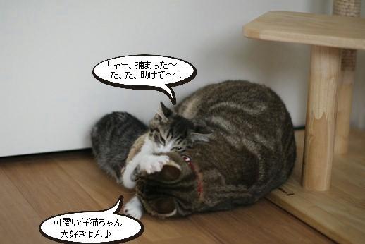 今日の保護猫さん達_e0151545_20533395.jpg