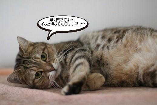 今日の保護猫さん達_e0151545_20534397.jpg