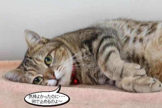 今日の保護猫さん達_e0151545_20535149.jpg