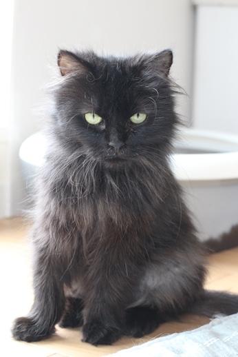 今日の保護猫さん達_e0151545_20582017.jpg
