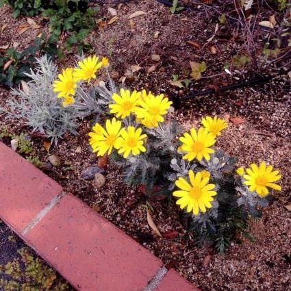 お庭。_d0178587_10193191.jpg