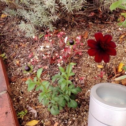 お庭。_d0178587_10263775.jpg