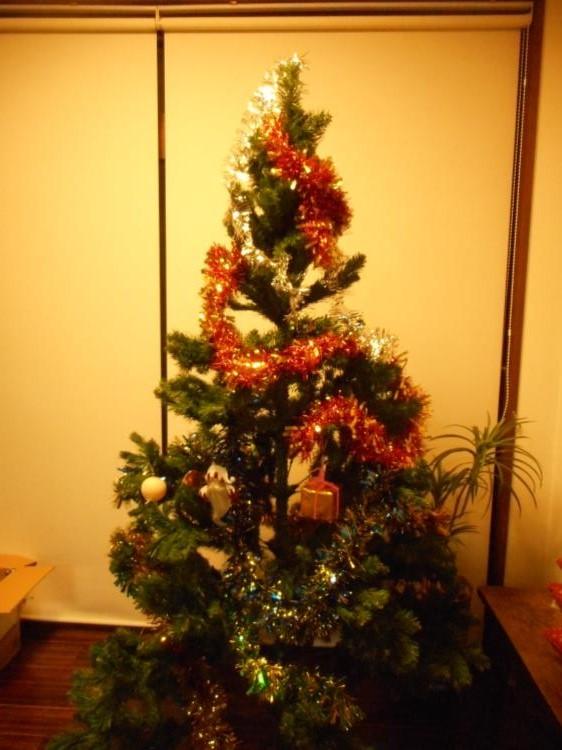 クリスマスシーズンに向けて_f0220087_354354.jpg