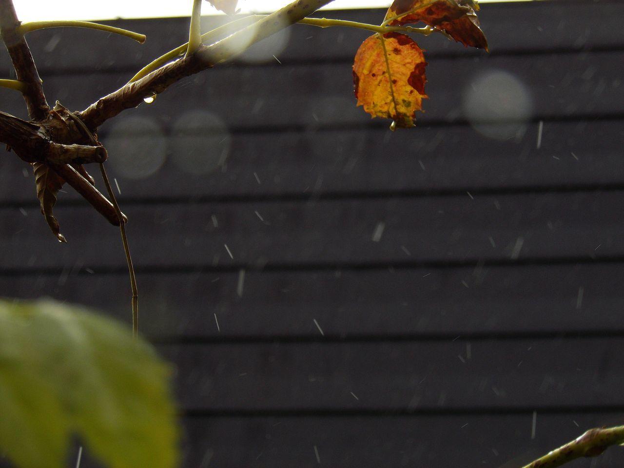 結局、雪は積もらず_c0025115_21513540.jpg