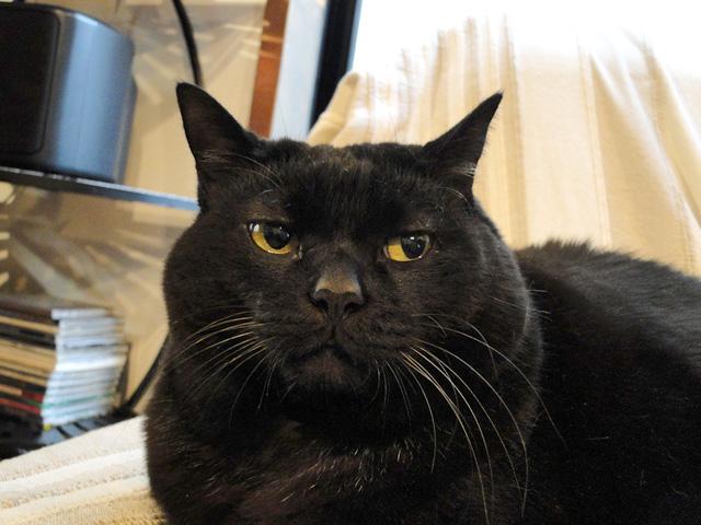 黒猫の団子_b0200721_17375366.jpg