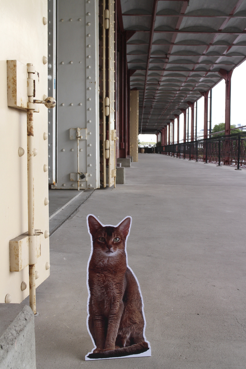 [猫的]今日から在廊します_e0090124_052541.jpg