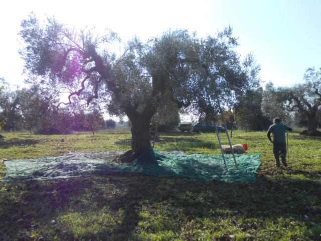 第2回目の収穫とオイルの感想_b0305039_6144654.jpg