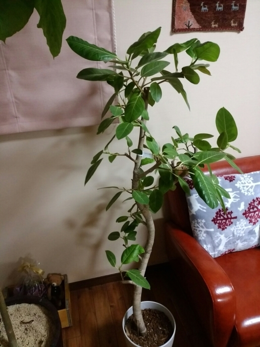 観葉植物_e0102439_05481744.jpg