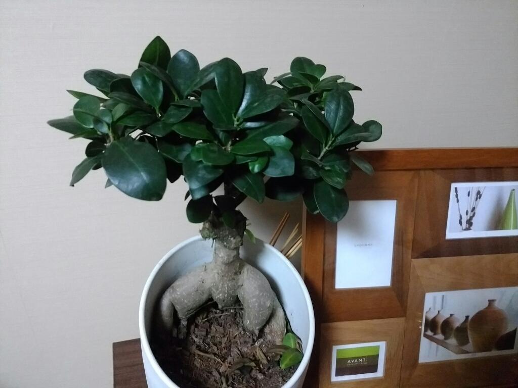 観葉植物_e0102439_05482158.jpg
