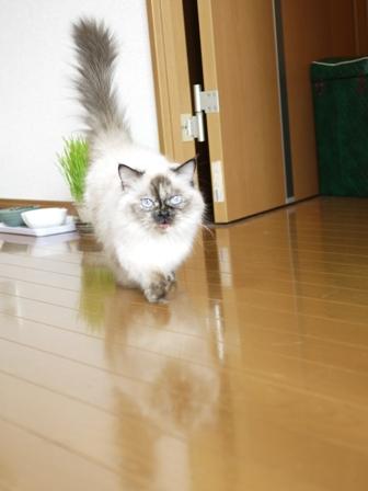 猫のお留守番 マリーちゃん編。_a0143140_22102161.jpg