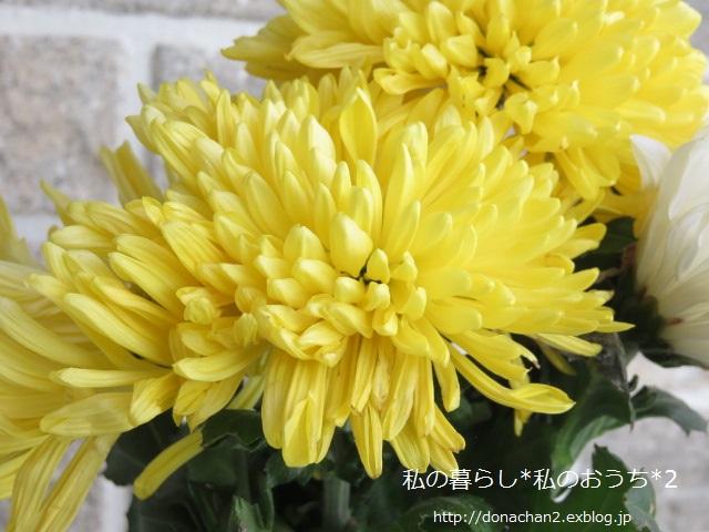 ++小さなこと*小さな喜び*++_e0354456_94417.jpg