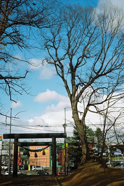 ハルニレの巨木と北の湖の直腸癌に思う_c0182775_16393735.jpg