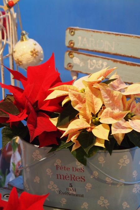 クリスマスのディスプレイ_a0292194_19195554.jpg