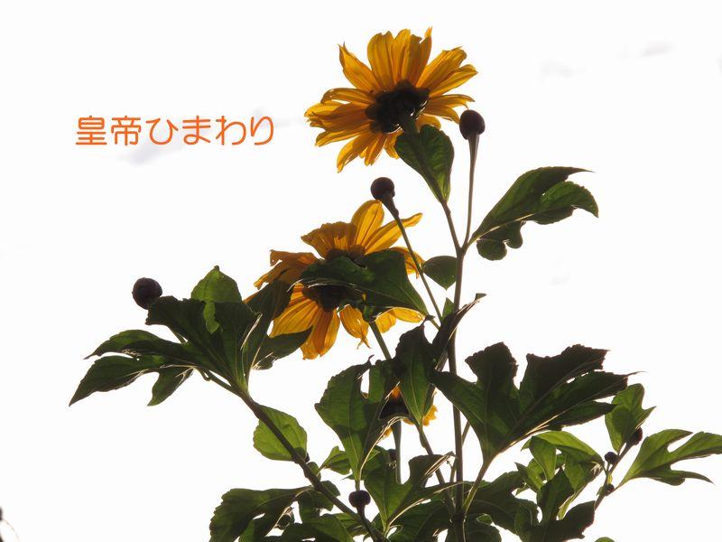 f0059498_21322432.jpg