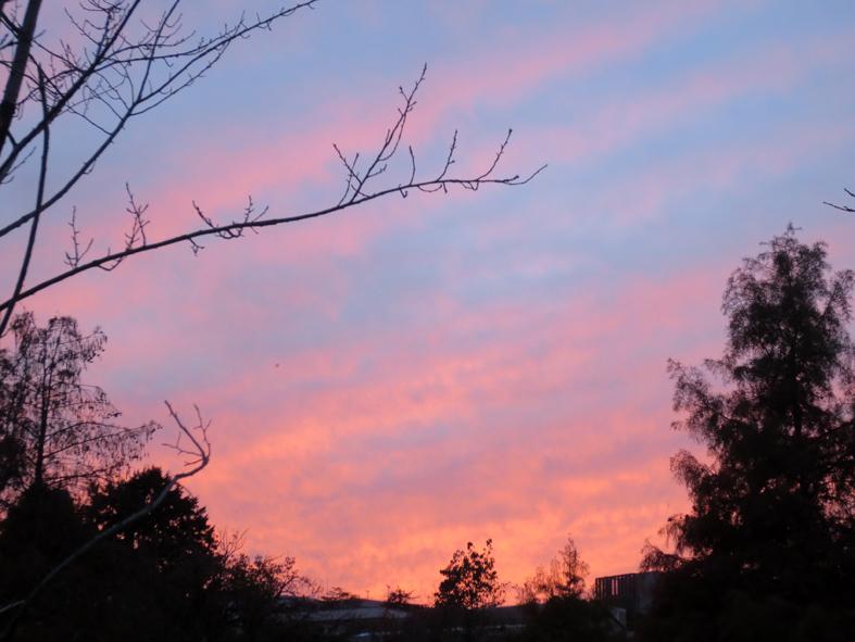 ■ピンク色の空に我が身を遁す時──週替わりの夕暮れ[11/19-22]_d0190217_22101173.jpg