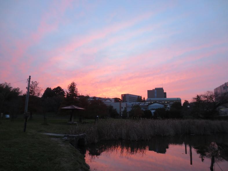 ■ピンク色の空に我が身を遁す時──週替わりの夕暮れ[11/19-22]_d0190217_2210251.jpg