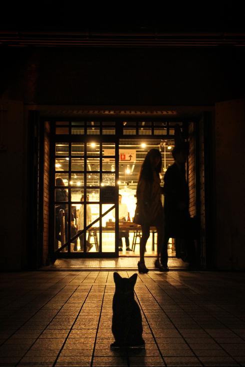 [猫的]赤レンガ倉庫ねこ写真展_e0090124_001936.jpg