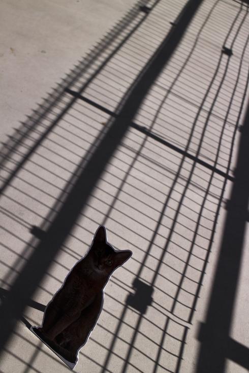 [猫的]いよいよ最終日の赤レンガ倉庫ねこ写真展_e0090124_23471497.jpg