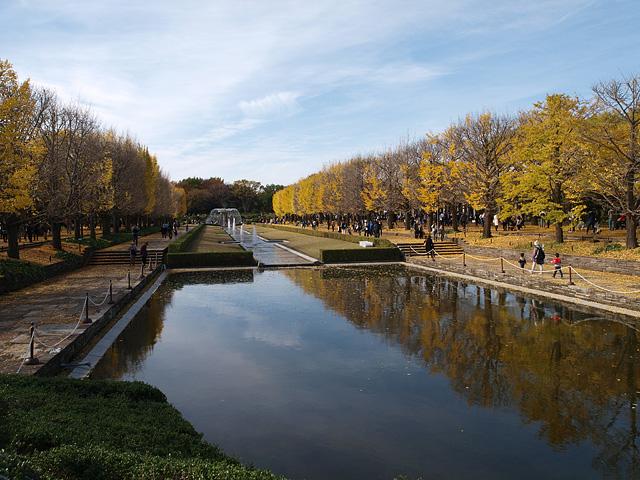 昭和記念公園の紅葉 (11/21)_b0006870_926158.jpg