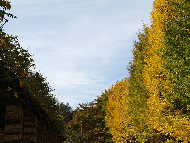 昭和記念公園の紅葉 (11/21)_b0006870_9262748.jpg