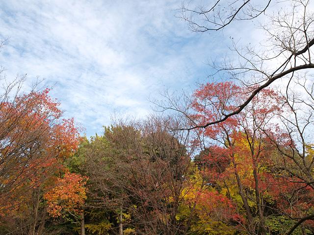 昭和記念公園の紅葉 (11/21)_b0006870_9272524.jpg