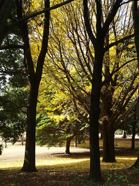 昭和記念公園の紅葉 (11/21)_b0006870_927519.jpg