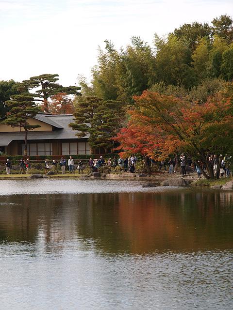 昭和記念公園の紅葉 (11/21)_b0006870_9275643.jpg
