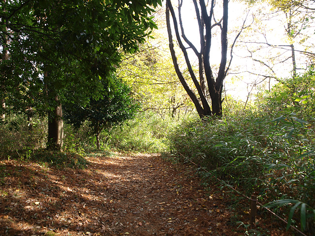 昭和記念公園の紅葉 (11/21)_b0006870_9281642.jpg