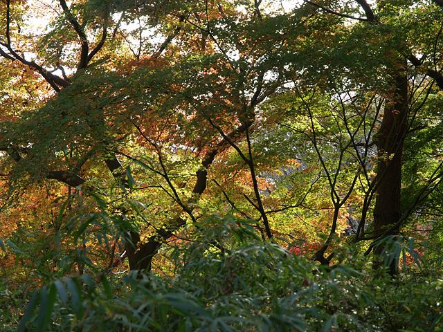 昭和記念公園の紅葉 (11/21)_b0006870_9283437.jpg