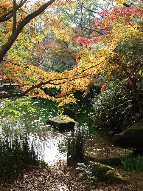 昭和記念公園の紅葉 (11/21)_b0006870_928451.jpg