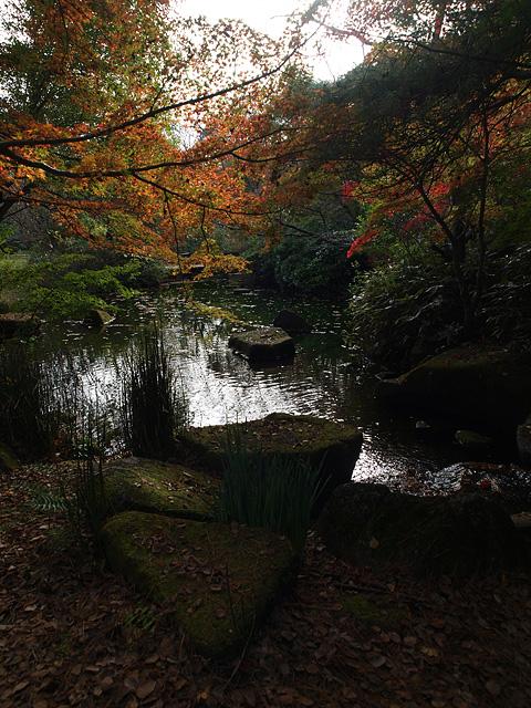 昭和記念公園の紅葉 (11/21)_b0006870_9285772.jpg