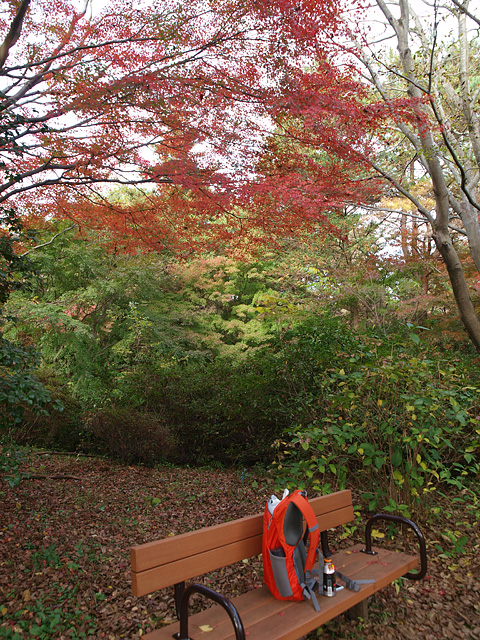 昭和記念公園の紅葉 (11/21)_b0006870_9291262.jpg