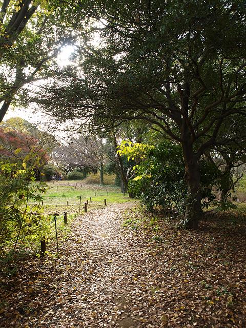 昭和記念公園の紅葉 (11/21)_b0006870_9293625.jpg